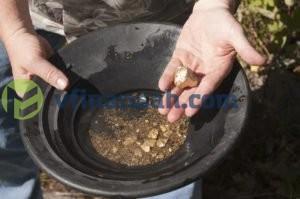 золото в лотке - Добыча золота в России физическими лицами