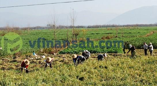 традиционная экономическая система, как правило, оринетируется на сельское хозяйство